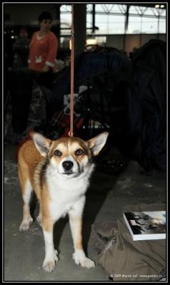 7.2. - lundehund