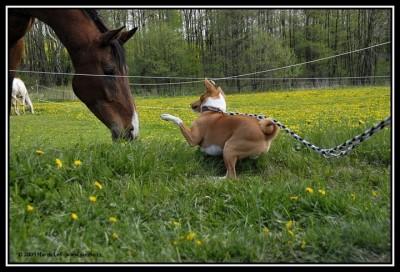 Gambo a kůň