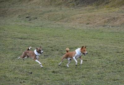 Běh do cíle