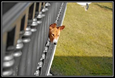 Kuk z balkónu