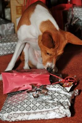 Který je můj dárek?
